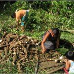 Salazar – Internat, Guyane française, 2009-2010
